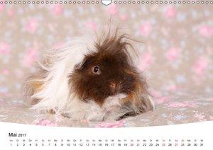 Niedliche Meerschweinchen (Wandkalender 2017 DIN A3 quer)
