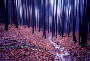 Premium Textil-Leinwand 120 cm x 80 cm quer Buchenwald im Herbst
