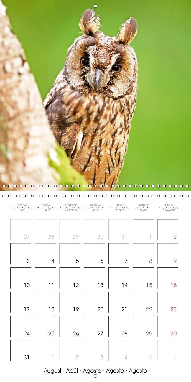 The owls are here: Funny animals edition (Wall Calendar 2015 300 - zum Schließen ins Bild klicken