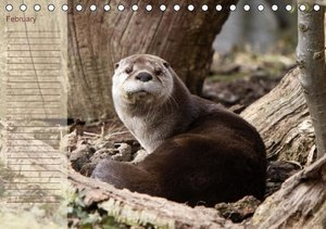 Otters / UK-Version / Birthday Calendar (Table Calendar perpetua