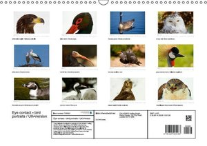 Eye contact - bird portraits / UK-Version (Wall Calendar 2015 DI