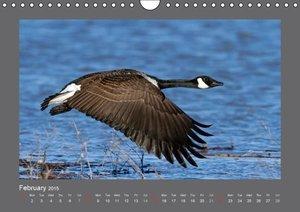 Henry, P: Birds / UK-Version