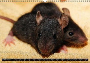 Fancy Rats Domesticated brown rats (Wall Calendar 2016 DIN A3 La