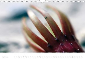 Tropical beach close-up Macro photography (Wall Calendar 2015 DI
