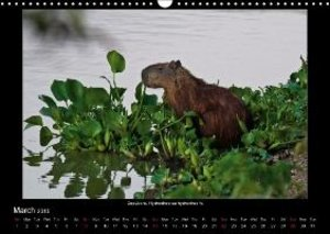 Animals of the Pantanal / UK Version (Wall Calendar 2015 DIN A3