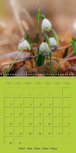 Blossom Portraits (Wall Calendar 2015 300 &times 300 mm Square)