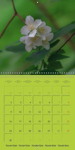 Blossom Portraits (Wall Calendar 2015 300 &times 300 mm Square)