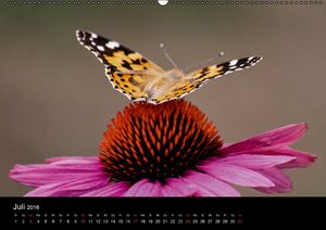 Spontane Fotografie: Tierpopos (Wandkalender 2016 DIN A2 quer)