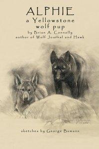 Alphie, a Yellowstone Wolf Pup