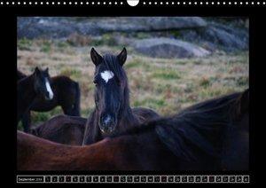 Garranos - Endangered Wild Horses of Europe (Wall Calendar 2016