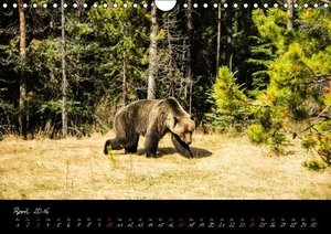 Oh Canada... 2016 (Wandkalender 2016 DIN A4 quer)