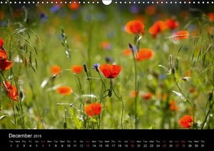 Poppies / UK-Version (Wall Calendar 2015 DIN A3 Landscape)
