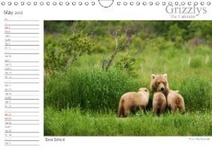 Grizzlys - The Calendar UK-Version (Wall Calendar 2015 DIN A4 La