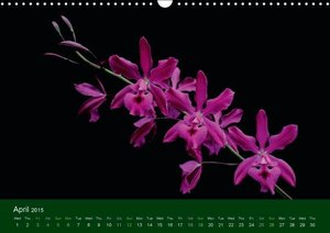 Orchid Gallery (Wall Calendar 2015 DIN A3 Landscape)