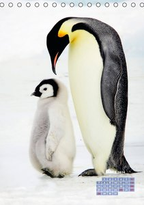 Freundschaft unter Pinguinen (Tischkalender 2016 DIN A5 hoch)