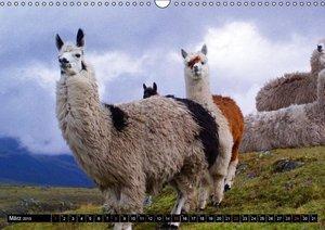 Stanzer, E: Alpakas und Lamas (Wandkalender 2015 DIN A3 quer