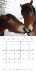 Emotions in pictures (Wall Calendar 2015 300 &times 300 mm Squar