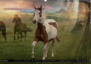 Western und PferdeCH-Version