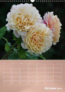 Delicate Beauties - Magnificent Roses (Wall Calendar 2015 DIN A3