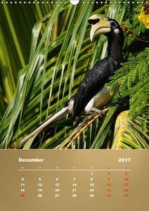 Orienthornvögel - Bezaubernde DschungelbewohnerCH-Version