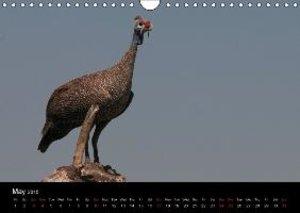 African Birds (UK-Version) (Wall Calendar 2015 DIN A4 Landscape)
