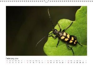 Macros from the World of Insects (Wall Calendar 2015 DIN A3 Land