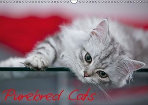 Purebred Cats (UK-Version) (Wall Calendar 2015 DIN A3 Landscape)