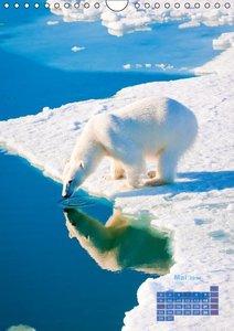 Eiszeit für Eisbären (Wandkalender 2016 DIN A4 hoch)