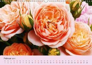 Rosen Reigen im Garten (Wandkalender 2017 DIN A3 quer)