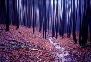 Premium Textil-Leinwand 75 cm x 50 cm quer Buchenwald im Herbst