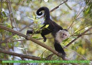Affen im Porträt: Mittel- und Süd-Amerika