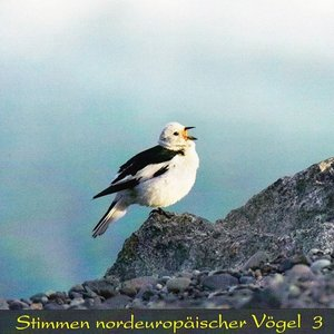 Stimmen nordeuropäischer Vögel (Vol.3)