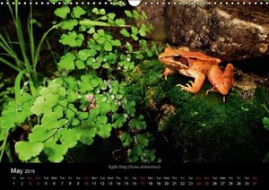 Frogs / UK-Version (Wall Calendar 2015 DIN A3 Landscape)