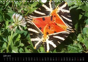 Nature et graphisme (Calendrier mural 2015 DIN A4 horizontal)