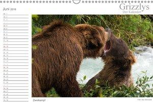 Grizzlys - Der Kalender (Wandkalender 2016 DIN A3 quer)