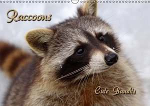 Raccoons / UK-Version (Wall Calendar 2015 DIN A3 Landscape)