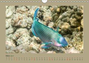 Unterwasserwelt Hawaii (Wandkalender 2017 DIN A4 quer)