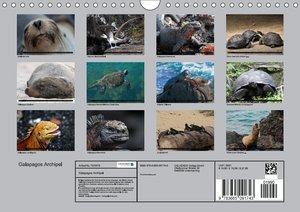 Galapagos Archipel- Faszination Tierwelt
