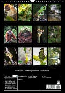 Wilde Natur - In den Regenwäldern Südostasiens
