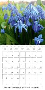 Laube, L: Nature's Blue Costume