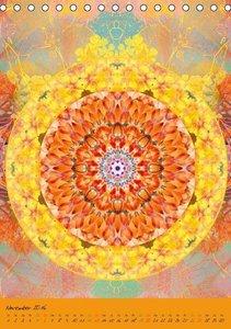 Blühende Mandalas (Tischkalender 2016 DIN A5 hoch)