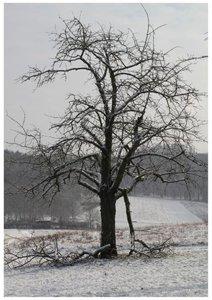 Bäume (Posterbuch DIN A4 hoch)