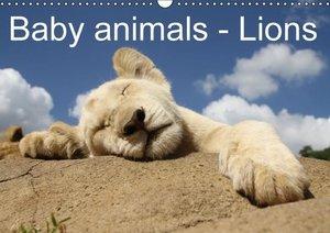 Baby animals - Lions (Wall Calendar 2015 DIN A3 Landscape)