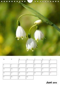 Frühlingserwachen (Wandkalender 2016 DIN A4 hoch)