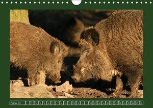 Lindert-Rottke, A: Schweinkram - Die Wildschweine sind los (