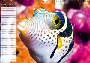 Fischparadies Riff (Wandkalender 2016 DIN A3 quer)