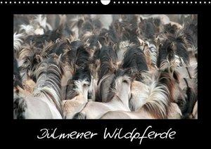 Dülmener Wildpferde (Wandkalender 2016 DIN A3 quer)