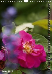 Summer Poetry (Wall Calendar 2015 DIN A4 Portrait)