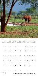 Safari in Kenya (Wall Calendar 2015 300 × 300 mm Square)