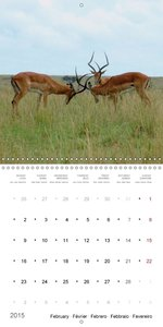 Safari in Kenya (Wall Calendar 2015 300 × 300 mm Square)